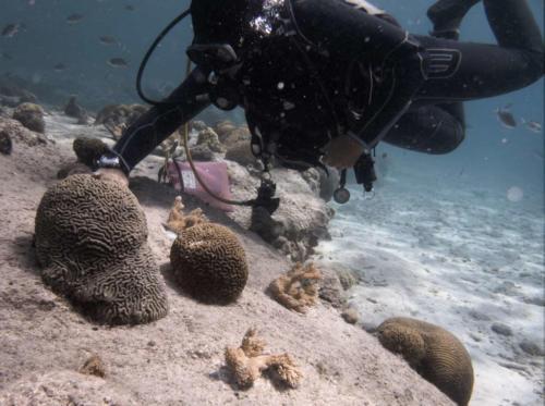 CoralRestoration-2