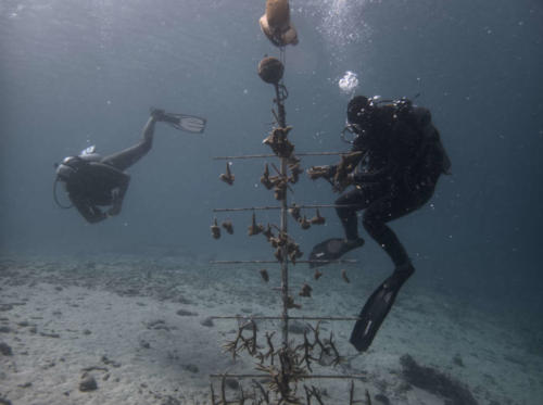 CoralRestoration-3
