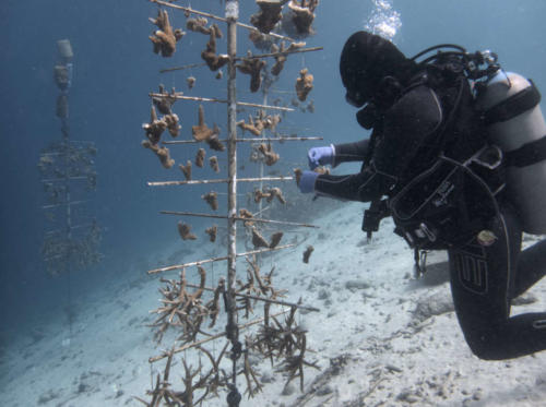 CoralRestoration-4