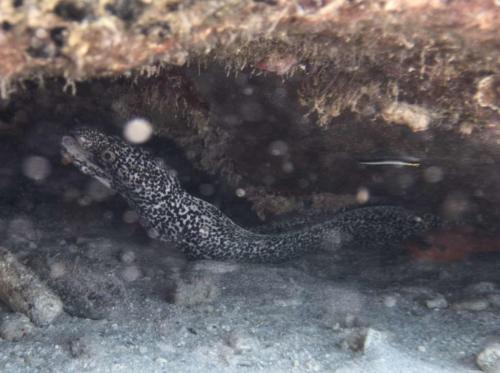 CoralRestoration-7