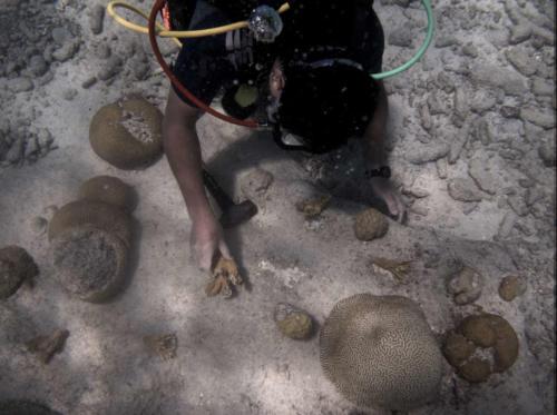 CoralRestoration-9