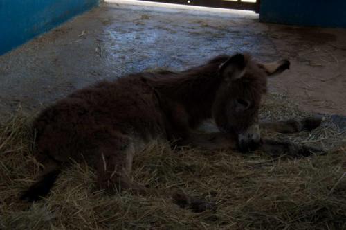 DonkeySanctuary-Foal