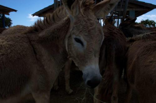 DonkeySanctuary - caring unit