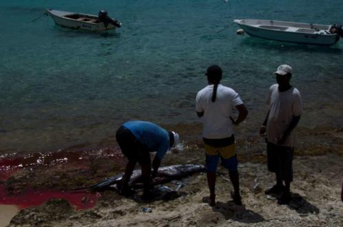 Fishermen catch a swordfish
