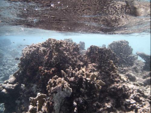 KleinBonaire-Reef